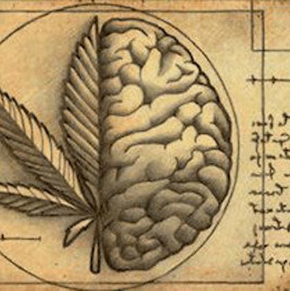 Was ist das Endocannabinoid-System und welche Rolle spielt es dabei?